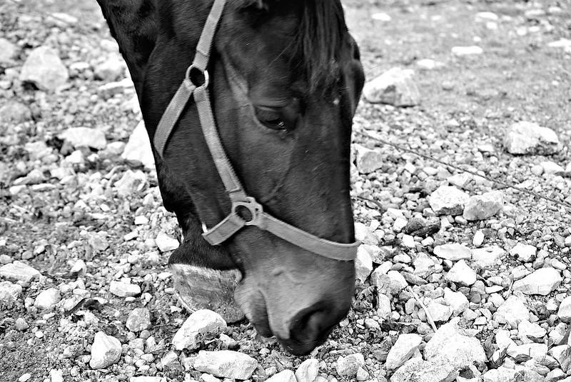 Horses 27.11 (3)