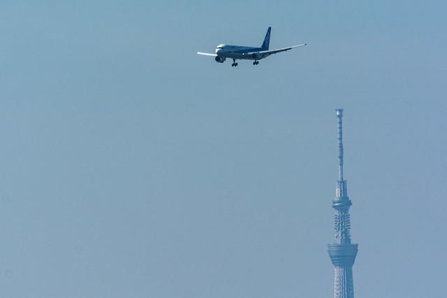 スカイツリーと飛行機の写真