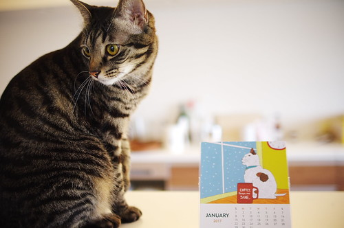 Koharu with a calendar