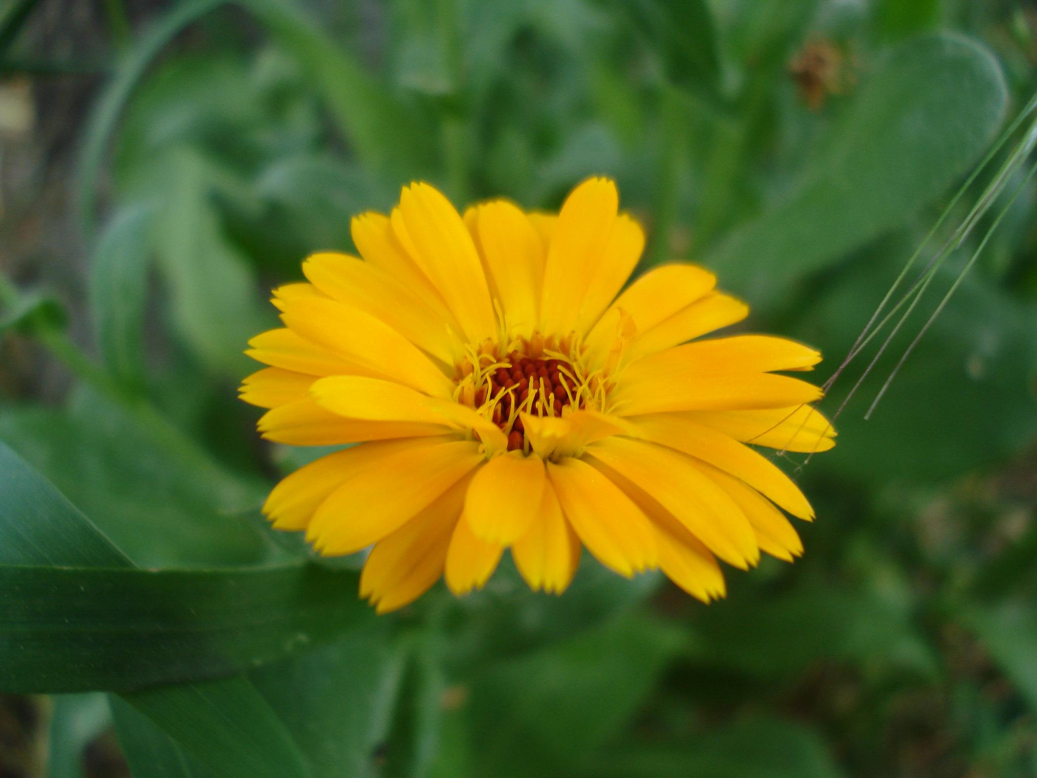 perpa çiçek
