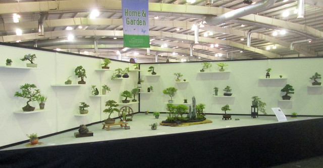Bonsai Gardening Scotland 2016