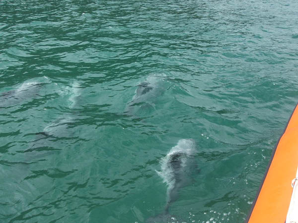 Akaroa and Swimming with the Dolphins