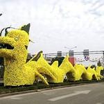 rongvang_pikachu