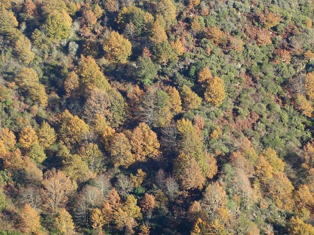 Bosque en Parada de Sil