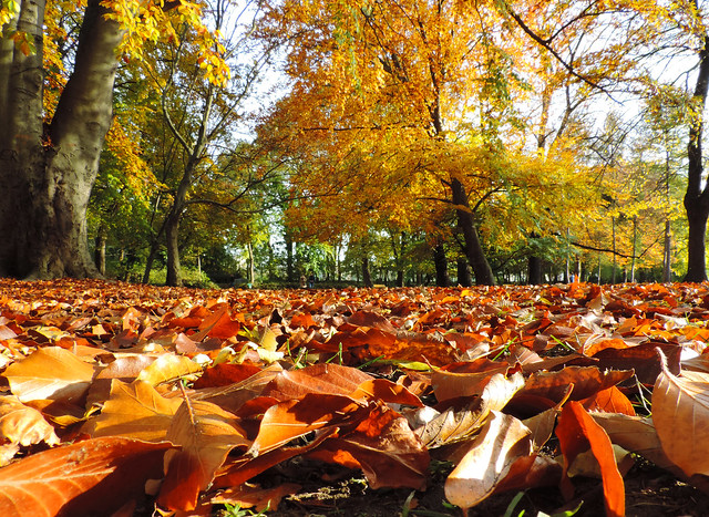 Finding Beauty In Our Backyard: Margaret Island, Budapest, Hungary