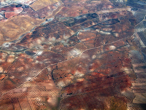 Newly planted olive groves south east of Madrid | by Lars Plougmann