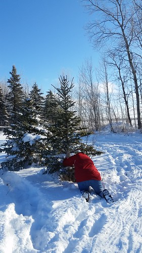 Christmas Tree Hunting 2016