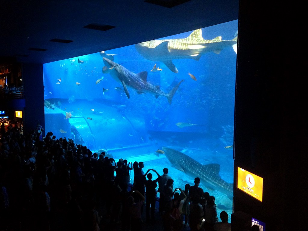 Churaumi Aquarium_02