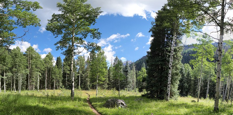 Sunny meadow panorama, with Irving Peak in the distance