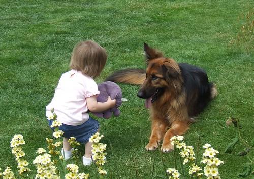 Dog Nips At Toddler Ears