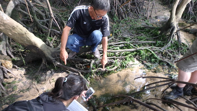 Restore Ubin Mangroves (R.U.M.) Initiative interviewed by the Straits Times