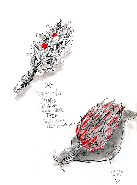 Sketchbook #101: Magnolia Seed Pod