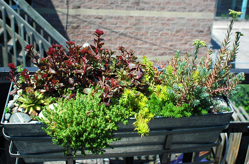 Succulent Box on Fire Escape | 2006 | by yougrowgirl