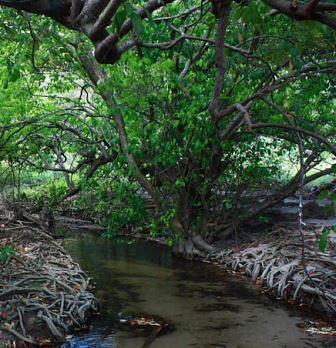 hutan dan sungai