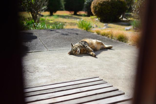 民家の玄関の軒先で甘えたポーズをとるネコの写真