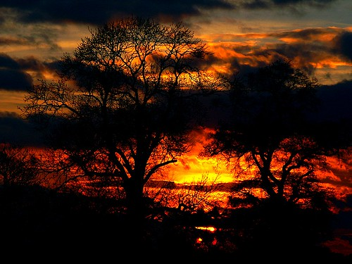 trees on fire | by algo