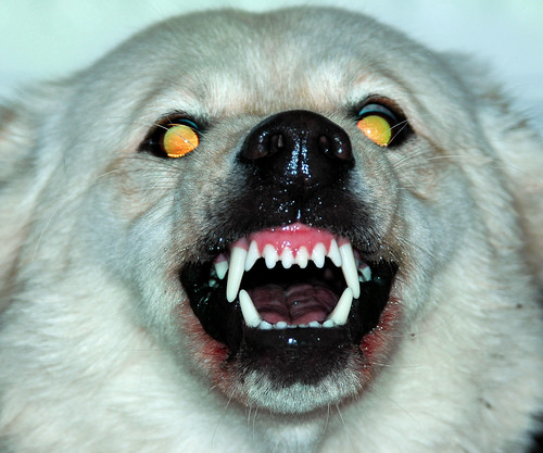 Evil Looking Dog Pictures