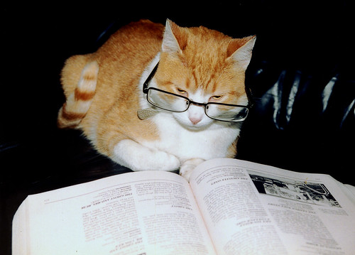 think your cat is smarter than mine? | by phantom kitty
