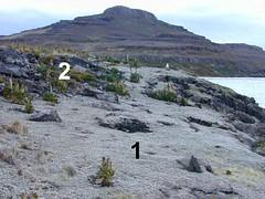 végétation cotière (archipel des Kerguelen)
