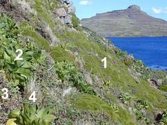 végétation de basse altitude - Iles Kerguelen - 05