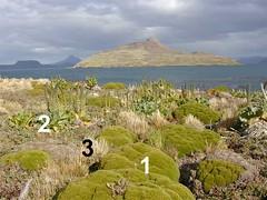 végétation de basse altitude - Iles Kerguelen - 07