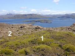 végétation de basse altitude - Iles Kerguelen - 04
