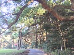 Meiji Jingu temple and park