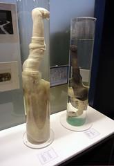 Museo fallologico islandese