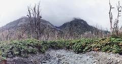 #volcan #chaiten
