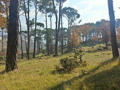 Bois des pins