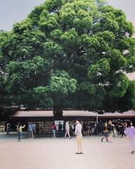 Meiji-Jingu, Tokyo