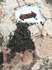 Scat on the trail marker