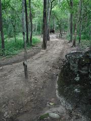 Forest Trail ทางเท้าในป่า