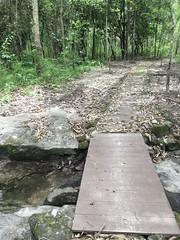 Footbridge and forest trail สะพานและทางเท้าในป่า