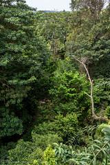 Singapore - Country Park