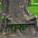 Hungry Tree, King's Inns Park
