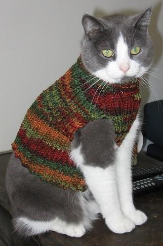 Cat vest Flickr - Photo Sharing!