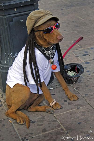 Rasta Dog On 6th Street Austin Texas Rasta Dog Don T