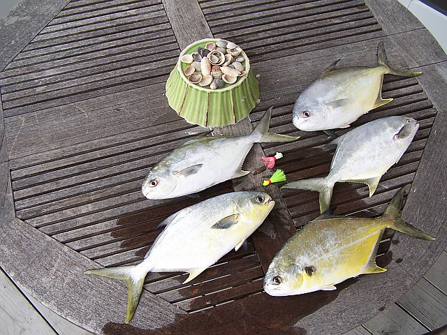 Pompano from the surf positively the best eating fish for Pompano fish good to eat