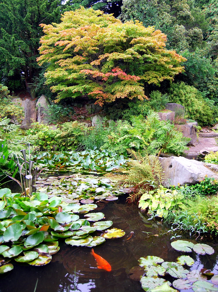 Rock garden pool birmingham botanical gardens i for Koi pool cue