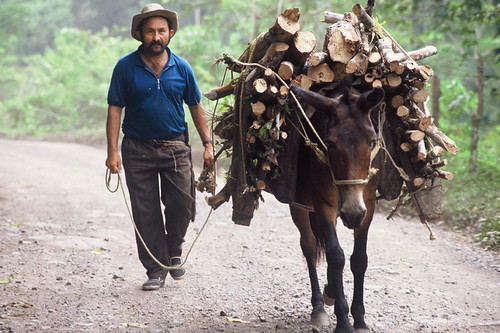 Transporting firewood | by World Bank Photo Collection