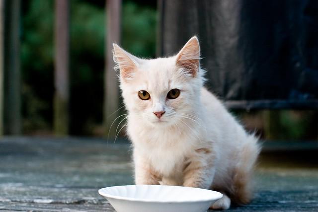 The Tawny Cat III