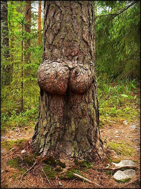 Tree Some Porn