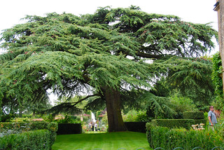 Branching Out at Hidcote Manor Garden | by antonychammond