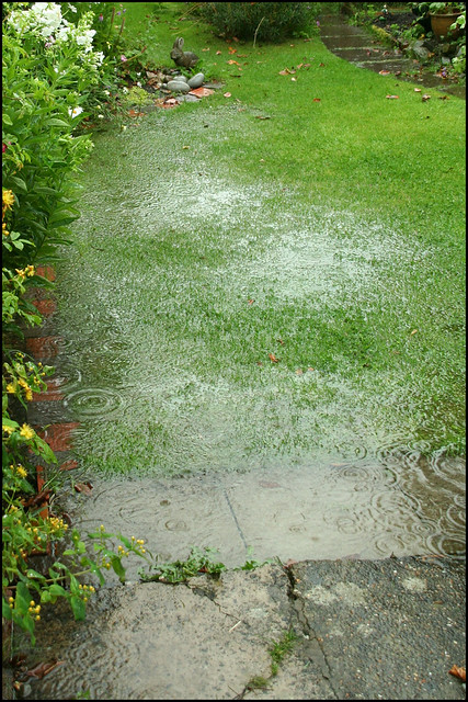 A Wet Lawn I Won T Be Cutting The Grass Today Then