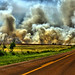 A Road to the Fire