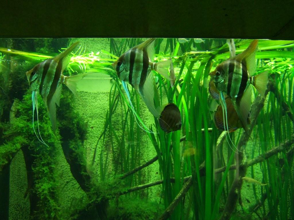Aquarium zoo frankfurt fische zierfische s wasser for Zierfische aquarium