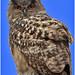 PP_Zoo_0096-3 Owl web