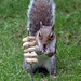 Cyril the squirrel up for a challenge 15:53:57