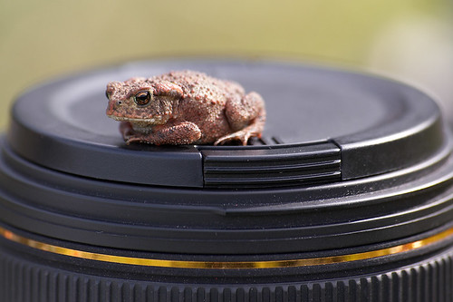 Mr Toad | by -RobW-